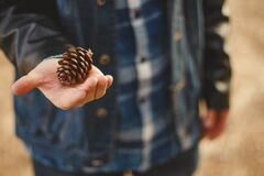 Pinecone in hand Stock Photography