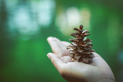 Pinecone on hand Royalty Free Stock Photo