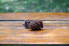 Pinecone hermoso en el escritorio de madera Foto de archivo libre de regalías