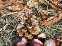 Pinecone i cisawe owoc kłaść na wysuszonych liściach, jesieni ulistnienie zdjęcia royalty free