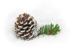 Pinecone i snön Royaltyfri Fotografi