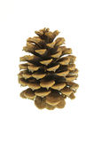 Pinecone. Isolated against white field Stock Photo