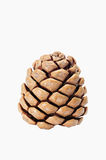 Pinecone Isolated On White Royalty Free Stock Image