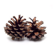 Pinecone - isolated on white Royalty Free Stock Photo