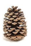 Pinecone. Isolated on white background Royalty Free Stock Images