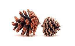 Pinecone isolated on white background Stock Images
