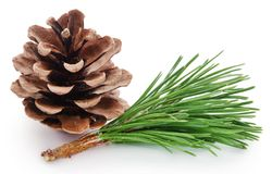 Pinecone with leaves Stock Photography
