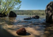 Pinecone, linha costeira do lago Donner imagens de stock royalty free
