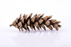 Pinecone na białym tle Zdjęcie Stock