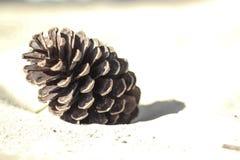 Pinecone nella sabbia fotografie stock