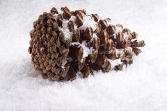 Pinecone Nevado Imagen de archivo libre de regalías