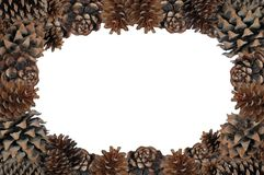 Pinecone page border. Royalty Free Stock Images