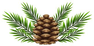 Pinecone with pine leaves on white background Stock Illustration