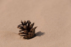 Pinecone in the sand Royalty Free Stock Images
