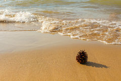 Pinecone on shore Royalty Free Stock Photography