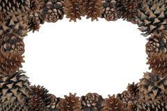 Pinecone sidakant. Royaltyfria Bilder