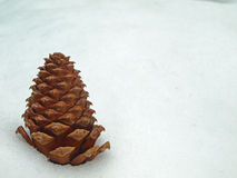 Pinecone in the Snow Royalty Free Stock Photos