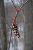 Pinecone solitário Imagem de Stock Royalty Free