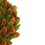 Pinecone square Royalty Free Stock Images