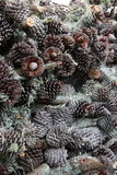 Pinecone stack Stock Photos