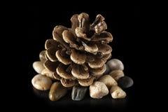 Pinecone stenar och svart bakgrund arkivbild