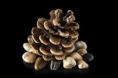 Pinecone Stones and Black Background stock photography