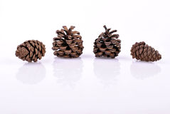 Pinecone sur le fond blanc Photo libre de droits