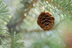 Pinecone surreal sonhador fotografia de stock royalty free
