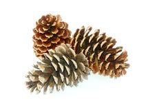 Pinecone três Imagens de Stock Royalty Free