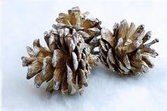 Pinecone van Kerstmis Stock Foto