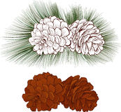 Pinecone Vector illustration  Stock Photography