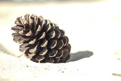 Pinecone w piasku Zdjęcia Stock