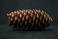 Pinecone-Weihnachten lizenzfreie stockfotografie
