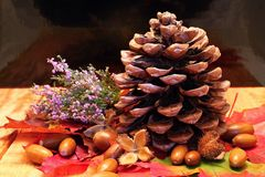 Pinecone on wooden board Royalty Free Stock Images