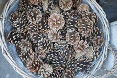 Pinecones в коробке Стоковая Фотография