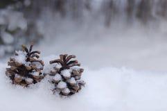2 Pinecones в снеге Стоковое фото RF