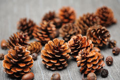 Pinecones Stock Photos