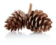 pinecones 2 ветви Стоковые Изображения