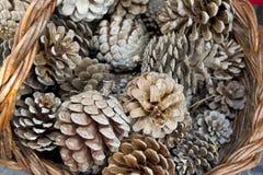 Pinecones Стоковое Изображение RF