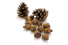 Pinecones Stock Foto