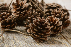 Pinecones Obraz Royalty Free