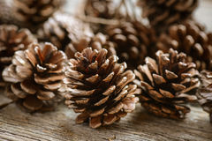Pinecones Fotografia Royalty Free