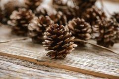 Pinecones Стоковая Фотография