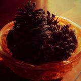 Pinecones Fotografia de Stock Royalty Free