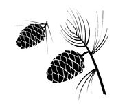 Pinecones. Black and white illustration of pine cones. Isolated against a white background