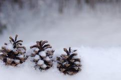 pinecones 3 Стоковое фото RF