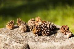Pinecones auf einen Block des Steins Lizenzfreie Stockfotos