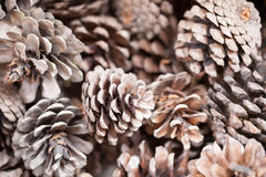 Pinecones background texture Royalty Free Stock Photos