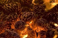 Pinecones calientes que brillan intensamente. Imagen de archivo libre de regalías