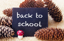 Pinecones and chalkboard with the words Back To School Royalty Free Stock Photos